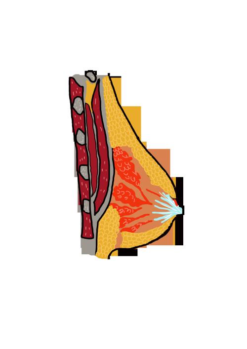 dibuix anatomic pit